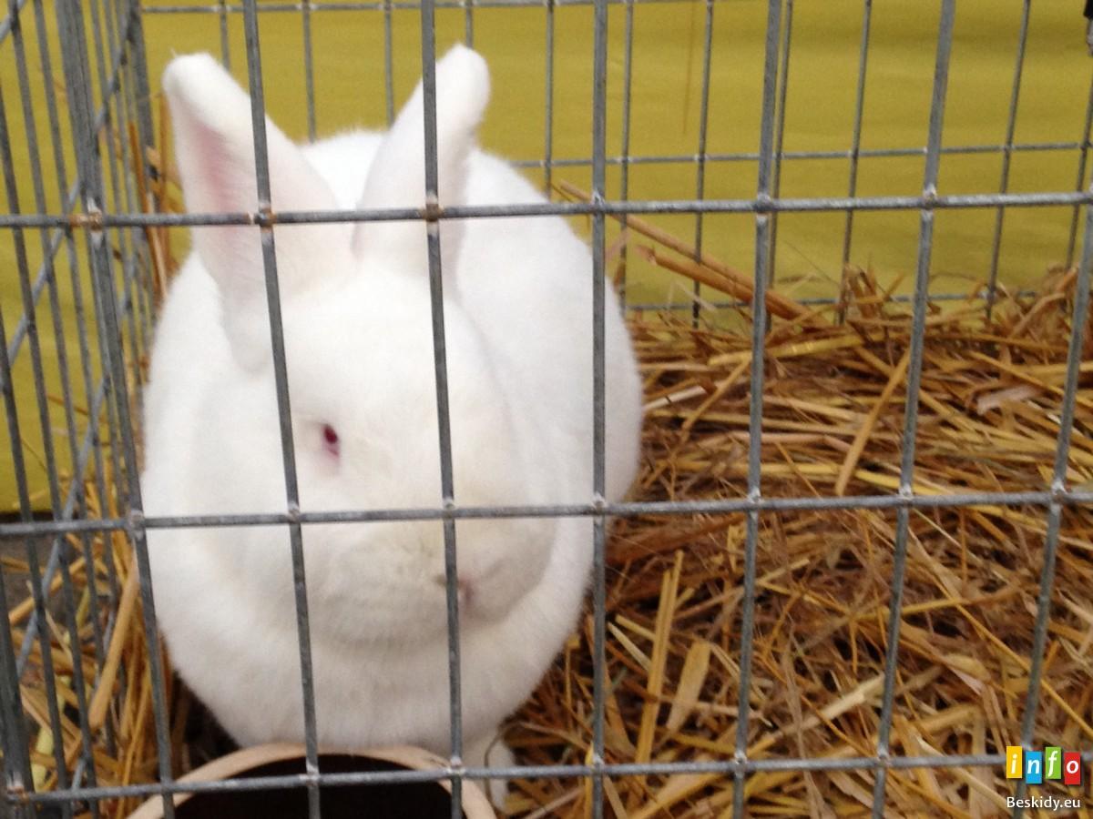Fotorelacja z III Beskidzkiej wystawy królików, gołębi rasowych oraz drobiu ozdobnego.