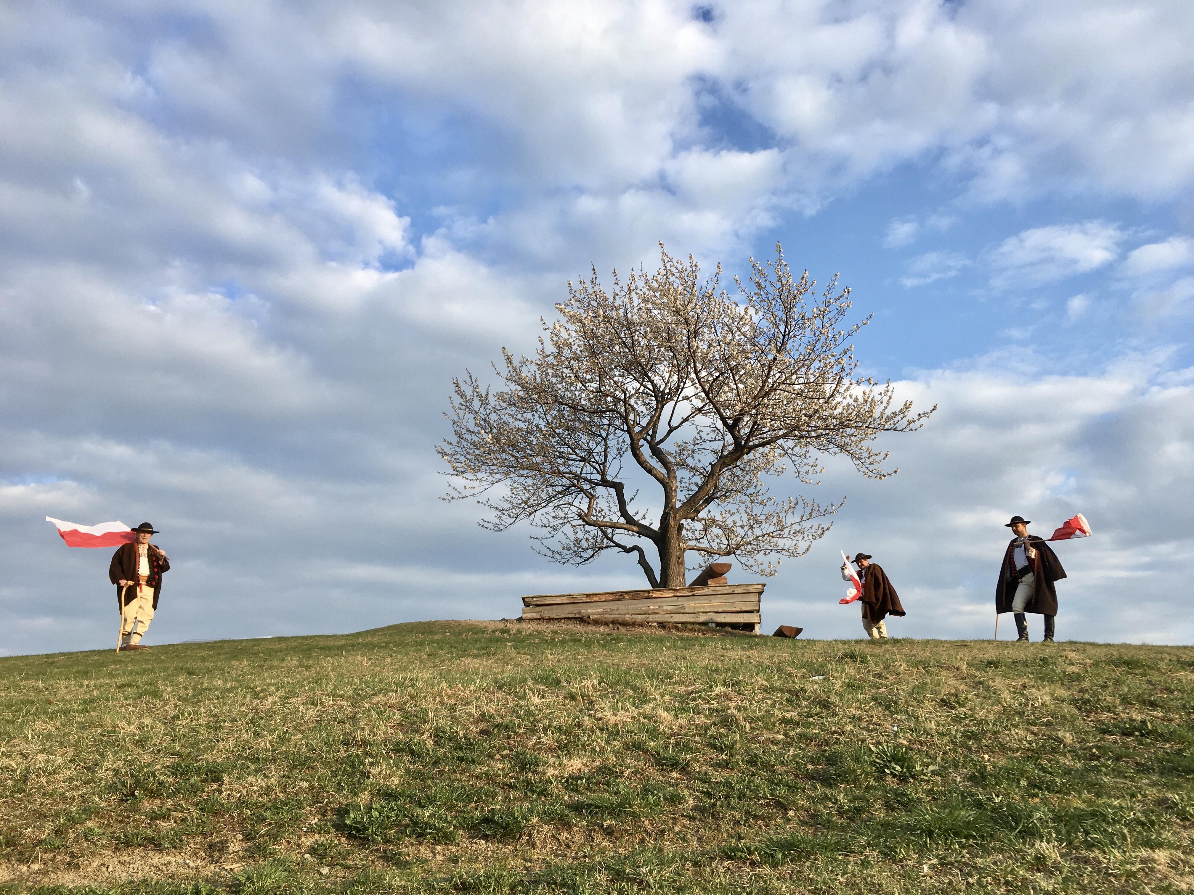 Dzika czereśnia z Cieńkowa  Drzewem Roku ?