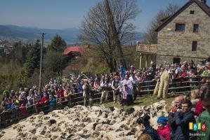 Owce wyszły na hale