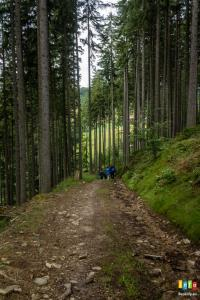 Terenowe wyjście do lasu !
