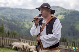 Owce wymieszane